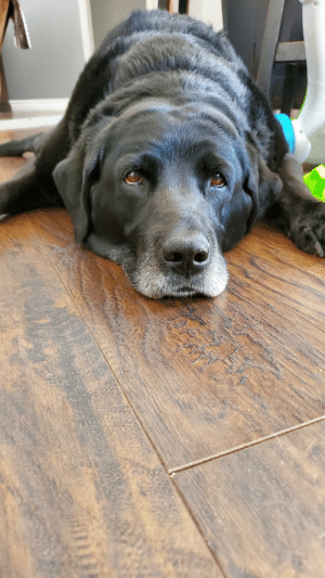This is Marley, she is 15 years old and damn near blind. But she is such a good girl, shes still playful and tip taps at your feet when shes excited(which is often). We love you Mars bar!: This is Marley, she is 15 years old and damn near blind. But she is such a good girl, shes still playful and tip taps at your feet when shes excited(which is often). We love you Mars bar!