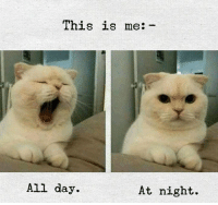 Day, All, and This: This is me:  All day.  At night.