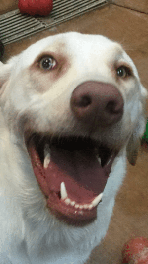 "This is Mia. Mia goes to doggy daycare. This is how Mia reacts when she finds out it is ""party day,"" when all the doggos get doggy ice cream.: This is Mia. Mia goes to doggy daycare. This is how Mia reacts when she finds out it is ""party day,"" when all the doggos get doggy ice cream."