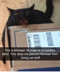 This is Michael: This is Michael. Michael is completely  blind. This does not prevent Michael from  doing cat stuff This is Michael
