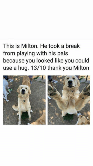 I liked that: This is Milton. He took a break  from playing with his pals  because you looked like you could  use a hug. 13/10 thank you Milton I liked that