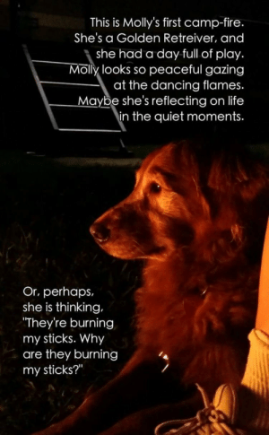 """Dancing, Fire, and Life: This is Molly's first camp-fire.  She's a Golden Retreiver, and  she had a day full of play.  Molly looks so peaceful gazing  at the dancing flames.  Maybe she's reflecting on life  in the quiet moments.  Or, perhaps,  she is thinking,  They're burning  my sticks. Why  are they burning  my sticks?"""" My sticks"""