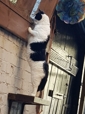Cats, One, and Moomin: This is Moomin, one of our cats, being nosey