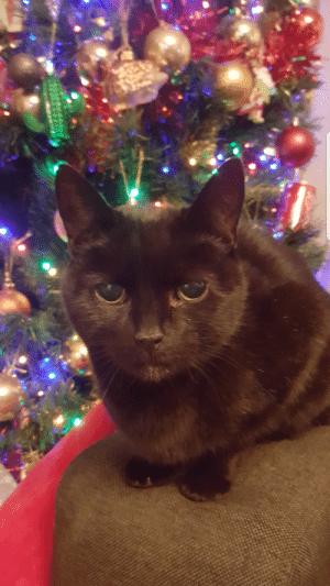 This is my 15 year old cat (Kitkat). Hes outlived two other cats and had the best time of his life running around like a kitten. Unfortunately hes going to the vets for the final time exactly a 3 years after his brother Tiger had to leave us aswell Just wanted to post my final picture I have of him.: This is my 15 year old cat (Kitkat). Hes outlived two other cats and had the best time of his life running around like a kitten. Unfortunately hes going to the vets for the final time exactly a 3 years after his brother Tiger had to leave us aswell Just wanted to post my final picture I have of him.