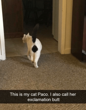 My cat Paco. via /r/funny https://ift.tt/2Lts5LV: This is my cat Paco. I also  exclamation butt  call her My cat Paco. via /r/funny https://ift.tt/2Lts5LV