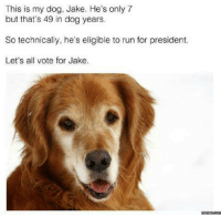 Run, Presidents, and Mexican Word of the Day: This is my dog, Jake. He's only 7  but that's 49 in dog years.  So technically, he's eligible to run for president.  Let's all vote for Jake.