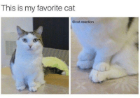 Memes, 🤖, and Cat: This is my favorite cat  @cat.reaction