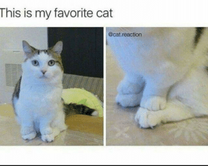 Is My Favorite: This is my favorite cat  @cat.reaction