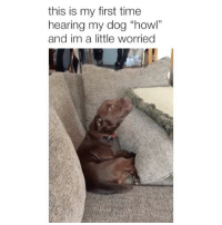 "Memes, Time, and 🤖: this is my first time  hearing my dog ""howl""  and im a little worried Seems normal 😂 Credit: @stefanie.braciszewski"