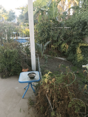 This is my grandma's garden! There's not really anything growing right now because it's winter here in California, but she normally grows tomatoes, cauliflower, broccoli, strawberries, and kale.: This is my grandma's garden! There's not really anything growing right now because it's winter here in California, but she normally grows tomatoes, cauliflower, broccoli, strawberries, and kale.