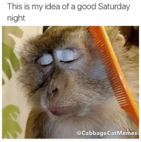 Me too @thenewsclan: This is my idea of a good Saturday  night  cabbage catMemes Me too @thenewsclan