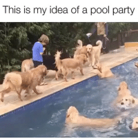 Party, Animal, and Girl: This is my idea of a pool party YASSSS Tag someone animal mad 💕