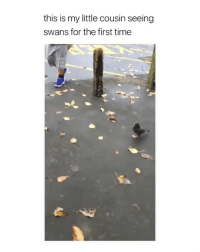 Instagram, Memes, and Best: this is my little cousin seeing  swans for the first time Hurry Follow @FreakNow The New BEST Freak Page On Instagram💦👅🍑