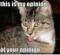 cheezburger: this is my opinion  of your opinion  CANHAS CHEEZBURGER coH