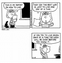Wise words from Sally snoopy snoopycomics peanuts cartoon snoopygram sally: THIS IS MY REPORT  ON HOW TO LIVE  THEY SAY THE BEST WAY  IS JUST TO LIVE ONE  DAY AT A TIME.  C A  @SNOOPY COMICS  IF YOU TRY TO LIVE SEVEN  DAYS AT A TIME, THE WEEK  WILL BE OVER BEFORE  YOU KNOW IT  20  2-16 Wise words from Sally snoopy snoopycomics peanuts cartoon snoopygram sally