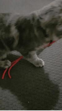 "Human, Rope, and Now: ""This is my rope now human"" - Max"