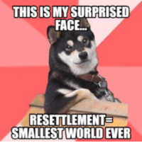 Surprised Meme: THIS IS MY SURPRISED  FACE  RESETTLEMENTE  SMALLEST WORLD EVER