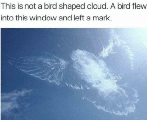 Family, Cloud, and Image: This is not a bird shaped cloud. A bird flew  into this window and left a mark. Rare image of the Duolingo bird coming for your family