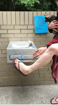 gross feet: THIS IS NOT A  FOOT WASH!  PLEASE KEEP YOU  FEET OUT OF TH  DRINKING FOUNTAIN  THANK YOU  PARK STAFF