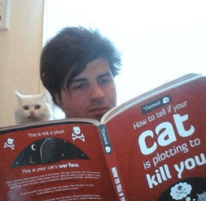 novelty-gift-ideas:  How to Tell If Your Cat Is Plotting to Kill You: This is not a yeun  How to tell if your  This is your cats war face.  cat  is plotting to  kill you novelty-gift-ideas:  How to Tell If Your Cat Is Plotting to Kill You