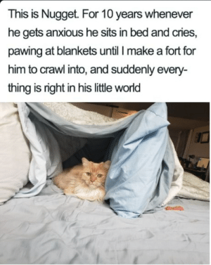 Nuggets is a treasure: This is Nugget. For 10 years whenever  he gets anxious he sits in bed and cries,  pawing at blankets until I make a fort for  him to crawl into, and suddenly every-  thing is right in his little world Nuggets is a treasure