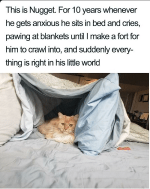 Cute Nugget via /r/wholesomememes https://ift.tt/2HF8V6H: This is Nugget. For 10 years whenever  he gets anxious he sits in bed and cries,  pawing at blankets until I make a fort for  him to crawl into, and suddenly every-  thing is right in his little world Cute Nugget via /r/wholesomememes https://ift.tt/2HF8V6H