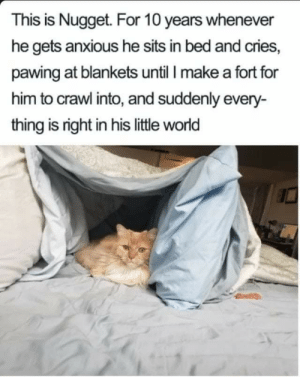 Meow_irl: This is Nugget. For 10 years whenever  he gets anxious he sits in bed and cries,  pawing at blankets until I make a fort for  him to crawl into, and suddenly every-  thing is right in his little world Meow_irl