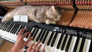 Dank, Good, and Piano: This is one good meowssage chair  By Minh Piano