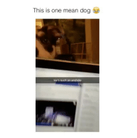 Mean, Asshole, and Dog: This is one mean dog  He's such an asshole Attention seeker