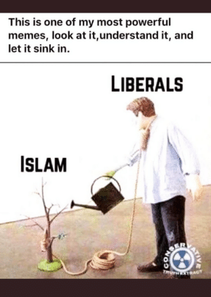 Grandma, Memes, and Islam: This is one of my most powerful  memes, look at it,understand it, an  let it sink in  LIBERALS  ISLAM  ONSER  TRUTH STRAGT  coN Of course Grandma!