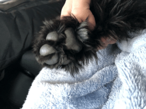 This is our new puppy's paws, he is an Australian cobberdog, couldn't love him more: This is our new puppy's paws, he is an Australian cobberdog, couldn't love him more