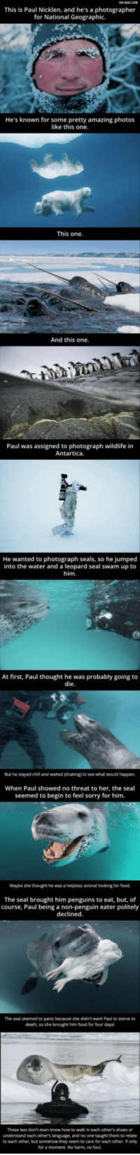 Food, Shoes, and Sorry: This is Paul Nicklen, and he's a photographer  for National Geographic.  He's known for some pretty amazing photos  like this one  This one  And this one.  Paul was assigned to photograph wildlife in  Antartica.  He wanted to  photograph seals, so he jumped  into the water and a leopard seal swam up to  him.  At first, Paul thought he was probably going to  die  But he stayed chil and waited (shaking) to see what would happen,  When Paul showed no threat to her, the seal  seemed to begin to feel sorry for him.  Maybe she thought he was a helpless animal looking for food.  The seal brought him penguins to eat, but, of  course, Paul being a non-penguin eater politely  declined.  The seal seemed to panic because she didn't want Paul to starve to  death, so she brought him food for four days  These two don't even know how to wak in each other's shoes or  understand each others language, and no one taught them to relate  to each other, but somehow they seem to care for each other, If only  for a moment. No harm, no foul. Just wanted to drop this to make y'all smile!
