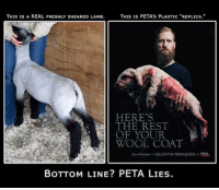 """Comfortable, Fresh, and Haircut: THIS IS PETA's PLASTIC """"REPLICA.""""  THIS IS A REAL FRESHLY SHEARED LAMB.  HERE'S  THE REST  OF YOUR  WOOL COAT  KILLED THE PROM QUEEN  BOTTOM LINE? PETA LIES. We raise sheep and if anyone tries telling you shearing them is cruel, that is a point blank LIE.  The guy in the image on the right admitted that what he is holding is made of foam, it is not even real.    Shearing sheep helps prevent disease, regulate body temperature, keeps them comfortable, etc. It does NOT hurt them, it's like getting a haircut or shaving your legs.  Shearing sheep also helps baby lambs nurse, they can find the udder much better to nurse without all that wool in the way.  It would be cruel to NOT shear a sheep.  It is proper husbandry.  H/t  Emsoff Livestock Company"""