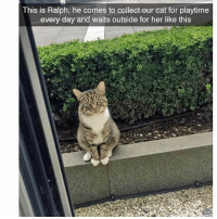 Cats, Funny, and Ted: This is Ralph, he comes to collect our cat for playtime  every day and waits outside for her like this  to What a gentleman (@hilarious.ted) Via @tastefullyoffensive