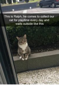 : This is Ralph, he comes to collect our  cat for playtime every day and  waits outside like this