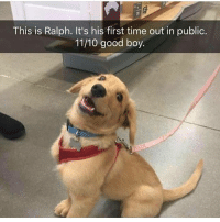 Cute, Memes, and Butterfly: This is Ralph. It's his first time out in public.  11/10 good boy. Follow my other account @x__social_butterfly_x for more cute pics!!