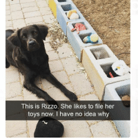 Wow way to make us all look bad: This is Rizzo. She likes to file her  toys now. I have no idea why Wow way to make us all look bad