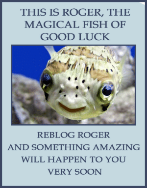 Cute, Gif, and Lol: THIS IS ROGER, THE  MAGICAL FISH OF  GOOD LUCK  REBLOG ROGER  AND SOMETHING AMAZING  WILL HAPPEN TO YOU  VERY SOON thefitally:  mysweetminiaussie:  cinnappo:  secondlina:  the-crystal-queen:  strangenewclassrooms:  pencilblots:  maryburgers:  maryburgers:  riskpig:  luthienebonyx:  telanu:  britney2007spears:  hoodoo-hoodlum:  I'm so mad because this worked  help me roger  Reblogging myself because Originally posted by gifs-for-the-masses Reblogging myself because… what was that? Five minutes? O_O  ………my friend has made me curious  help me roger  Update: after I reblogged this someone messaged me offering me tickets to the sold out Hausu screening with a Q&A and autograph session with the director  These never work for me, but here's to trying.  I don't believe in these things But last time I reblogged one ten/fifteen minutes later I got a call offering me a job But I reblogged it because I was waiting on hearing back from the job. So there you go. Roger is cute.  Eh Roger is cute I might as well  That fish is so happy it makes me happy.  Reblogging myself because I reblogged this yesterday and got promoted today!  oh what the hell…lol.  this is important