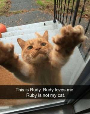 Mee: This is Rudy. Rudy loves mee  Ruby is not my cat.