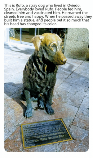 Good boi is still loved: This is Rufo, a stray dog who lived in Oviedo,  Spain. Everybody foved Rufo. People fed him,  cleaned him and vaccinated him. He roamed the  streets free and happy. When he passed away they  built him a statue, and people pet it so much that  his head has changed its color.  A RUFO, EL PERRO DE OVIEDO  EN HOMENAJE A TODOS AQUELLOS OUG  DEDICAN SUS ESFUERZOS AAYUDA  A LOS ANIMALES ABANDONAPOS  ESCULTORA SARA IGLESIAS POL  SEPTEDBREV01  OBRA K KIZDAPOR INIEATVA POPULAR Good boi is still loved