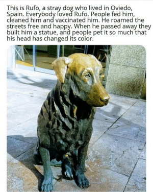 He's getting his colour back :): This is Rufo, a stray dog who lived in Oviedo,  Spain. Everybody foved Rufo. People fed him,  cleaned him and vaccinated him. He roamed the  streets free and happy. When he passed away they  built him a statue, and people pet it so much that  his head has changed its color. He's getting his colour back :)
