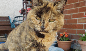 This is Sasha, the oldest cat alive at 33 years.: This is Sasha, the oldest cat alive at 33 years.