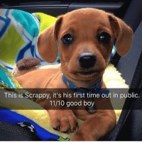 Memes, Butterfly, and Good: This is Scrappy, it's his first time out in public.  11/10 good boy Follow me @antisocialtv @lola_the_ladypug @x__social_butterfly__x @x__antisocial_butterfly__x