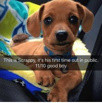 Funny, Butterfly, and Good: This is Scrappy, it's his first time out in public.  11/10 good boy @x__social_butterfly__x is hilarious