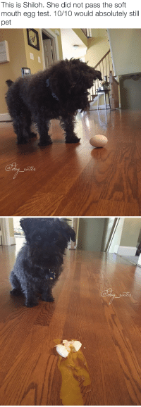 """Animals, Target, and Tumblr: This is Shiloh. She did not pass the soft  mouth egg test. 10/10 would absolutely still  pet   ats  Co <p><a href=""""http://animalrates.tumblr.com/post/146475987709/more-animals-rated-here"""" class=""""tumblr_blog"""" target=""""_blank"""">animalrates</a>:</p>  <blockquote><p><a href=""""http://animalrates.tumblr.com/"""" target=""""_blank"""">more <b>animals rated</b> here</a></p></blockquote>"""