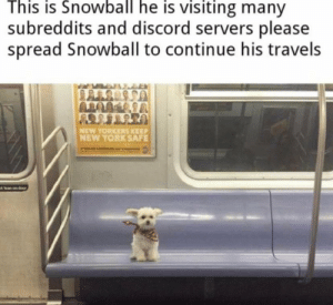 Lean, New York, and Discord: This is Snowball he is visiting many  subreddits and discord servers please  spread Snowball to continue his travels  NEW YORKERS KEEP  NEW YORK SAFE  ot lean on door Please keep on spreading him
