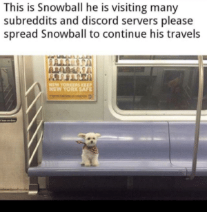 World travel: This is Snowball he is visiting many  subreddits and discord servers please  spread Snowball to continue his travels  NEW YORKERS KEEP  NEW YORK SAFE  lean on door World travel