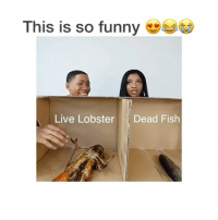 Baseball, Basketball, and Chill: This is so funny  Live Lobster Dead Fish Follow @daunts for a follow back 😂😍😩. . Follow @funnyclipsig for more ! . . Tags (ignore): lol lmao lmfao rofl laugh funny smile happy laughter chill love zone funnyclips clips daily nochill hoodclips funnier sports gym l4l f4f basketball football soccer baseball insane hood funniest funnyclipsig