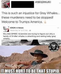 America, Family, and Killer Whales: This is such an injustice for Gray Whales.  these murderers need to be stopped!  Welcome to Trumps America.  KRON 4 News  KRON4  Yesterday at 12:11 PM  3  KILLING SPREE: Scientists are trying to figure out why a  family of 9 killer whales is attacking and eating baby gray  whales.  ERICA  TMUSTHURT TO BE THAT STUPID ITS NATURE YOU CUCK!!!!
