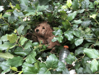 In The Bushes